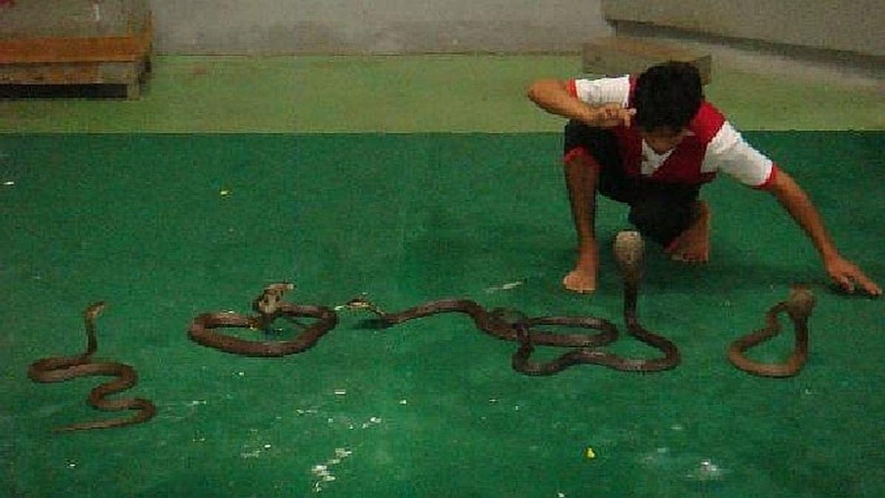 Snake Farm